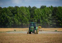 siewnik do kukurydzy